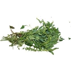 Ruda fresca agroecológica 10 g