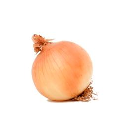cebolla normal orgánica 1 u