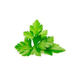 cilantro orgánico 120 g
